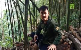 luat-ve-lang-tan-pha-rung-thai-nguyen