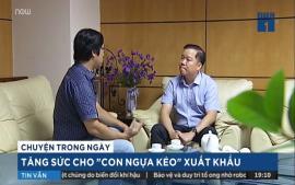 tang-suc-cho-con-ngua-keo-xuat-khau