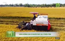 san-luong-lua-ca-nuoc-dat-20-trieu-tan