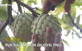ron-rang-mua-thu-hoach-na-dai-dong-trieu